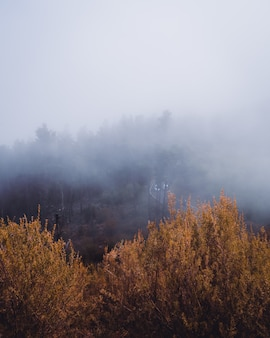 Vertical high angle shot of yellow trees covered by the fog