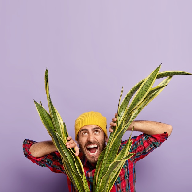 Vertical image of emotional caucasian man shouts loudly, keeps both hands on sansevieria, dressed in stylish clothes, opens mouth widely, poses against purple background, free space for your promotion