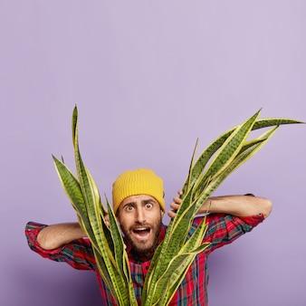 L'immagine verticale del fiorista maschio sorpreso perplesso guarda attraverso le foglie della pianta del serpente verde, si prende cura della pianta d'appartamento, ama il suo lavoro, indossa un copricapo giallo e una camicia rossa a scacchi, posa al coperto