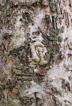 Vertical image of the texture of tree bark with gnarl