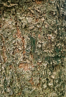 Vertical image of weathered rough tree bark