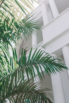 Vertical interior shot of a large leafy plant with white architecture