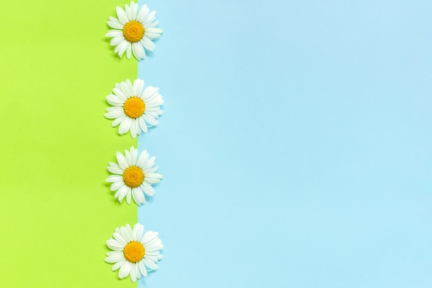 Vertical line chamomiles daisies flowers on green and blue background
