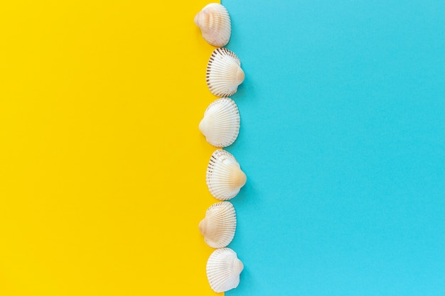 Vertical line seashells on yellow and blue color paper background in minimal style