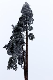 Inquadratura dal basso verticale di un bellissimo albero alto con il cielo luminoso sullo sfondo