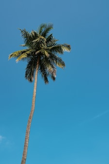 Vertical low angle shot of coconut tree against a blue background