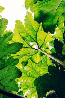 Inquadratura verticale dal basso di foglie verdi sotto l'ombra del sole - ottimo per gli sfondi
