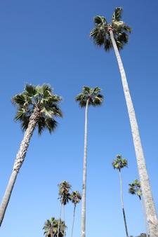 Colpo verticale di angolo basso di molte palme alte sotto il cielo