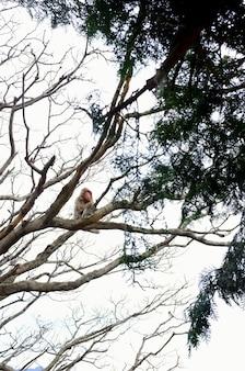 Inquadratura dal basso verticale di una scimmia seduta sul ramo di un albero