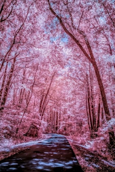 적외선으로 촬영 한 아름다운 키 큰 나무로 둘러싸인 도로의 수직 낮은 각도 샷