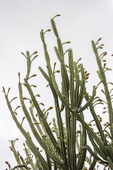 Вертикальный снимок зеленых кактусов под низким углом под ясным небом