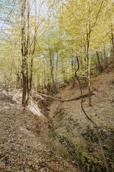 日光の下で森の中の背の高い木の垂直ローアングルショット