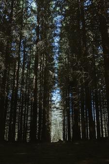 푸른 하늘 아래 숲에서 숨막히는 키 큰 나무의 수직 낮은 각도 샷