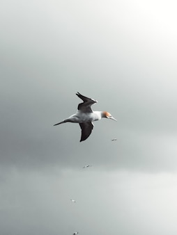 Vertical low angle shot of a seagull flying in the sky in the cloudy weather