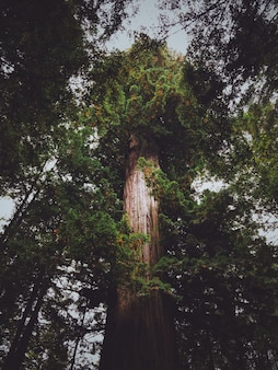 Vertical low angle shot of a tall tree in the forest