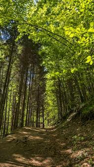 Inquadratura verticale dal basso di un sentiero nella foresta