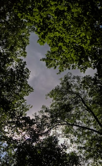 Vertical low angle shot of the trees under the cloudy sky