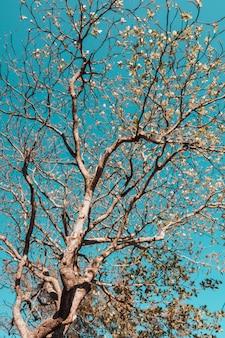 Вертикальный низкий угол обзора дерева, покрытого листьями, под солнечным светом и голубым небом