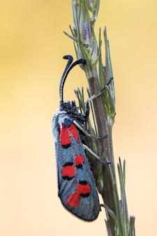 Macro immagine verticale di una falena su una pianta
