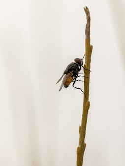 Vertical macro shot of a fly on a thin branch