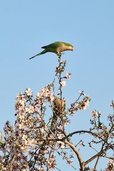 日光と青い空の下で花の咲く木にとまるインコの垂直