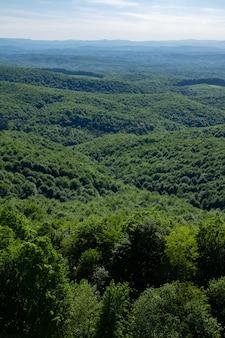 Вертикаль зеленого леса на холмах кордун в хорватии