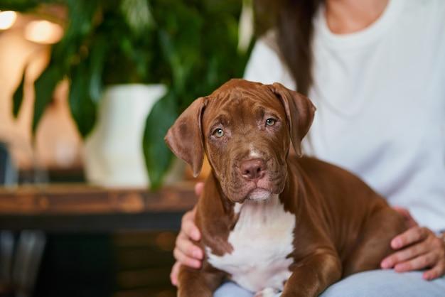 Вертикаль неизвестного домашнего животного-родителя, обнимающего щенка питбуля, лежащего на коленях и смотрящего в камеру