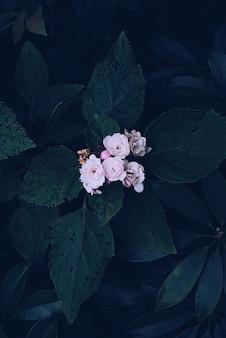 개화 핑크 베고니아 꽃의 수직 오버 헤드 샷