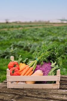 필드에 야채와 함께 상자의 세로 사진