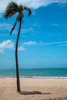 바람이 부는 날에 모래 해변 한가운데에 긴 야자수의 세로 사진