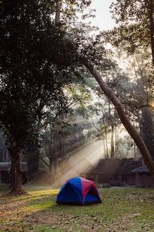 숲에서 가족 캠핑 텐트의 세로 사진. 야영 자원을 가진 태국의 국립 공원. 높은 나무 사이의 멋진 아침 빛. 아시아의 자연, 트레킹 및 관광