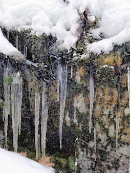 Vertical picture of icicles on a rock covered in the snow and mosses under the sunlight