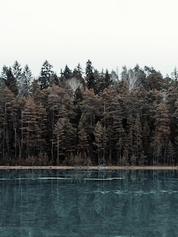 Vertical picture of a lake surrounded by a forest with trees reflecting on the water