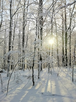 Вертикальное изображение леса, покрытого деревьями и снегом, под солнечным светом в ларвике в норвегии.