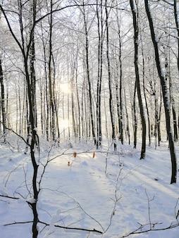 ノルウェーのラルヴィークで日光の下で木と雪に覆われた森の垂直方向の画像