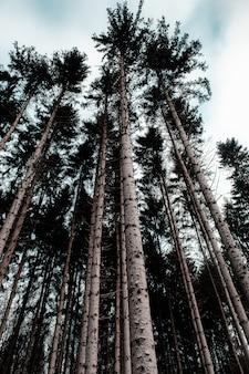 Вертикальный снимок леса в окружении листвы и высоких деревьев под пасмурным небом