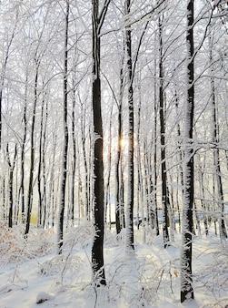 Вертикальное изображение леса, окруженного деревьями, покрытыми снегом, под солнечным светом в норвегии