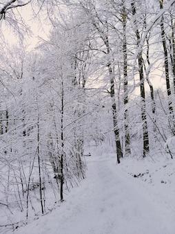 ノルウェーの日光の下で雪に覆われた木々に囲まれた森の垂直方向の写真
