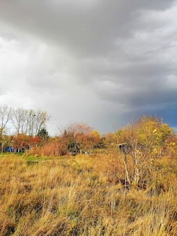 ポーランドの秋の間に曇り空の下で牧草地の垂直方向の画像