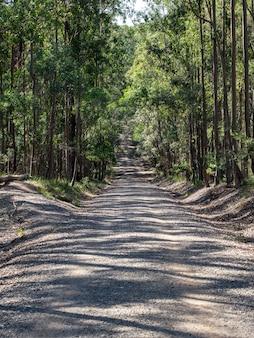 日光の下で森の木々に囲まれた道路の垂直方向の画像