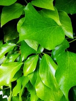 日光の下で木の葉の垂直方向の写真