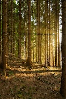 Вертикальное изображение выстроенных деревьев в лесу