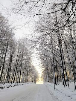 노르웨이의 햇빛 아래 눈에 덮여 나무로 둘러싸인 도로의 세로 그림