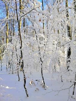 Вертикальное изображение деревьев в лесу, покрытом снегом в ларвике в норвегии