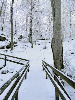Vertical picture of trees surrounded by wooden fences covered in the snow in larvik in norway