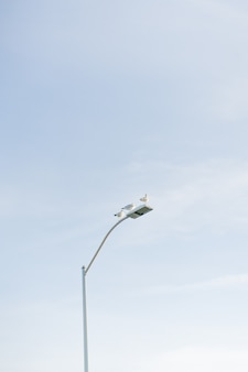 Vertical of the pigeons sitting on a white street lamp with the sky