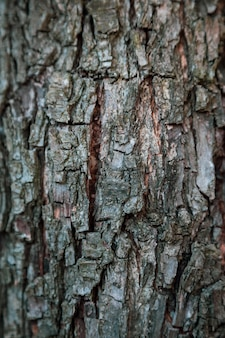 Vertical relief texture background of the brown bark of a tree. wallpaper for device