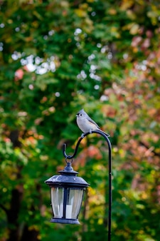 Vertical selective focus shot of a bird perched with trees