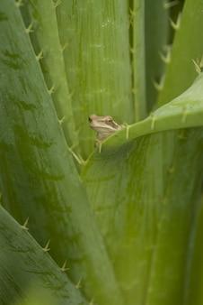 Colpo verticale del fuoco selettivo di una piccola rana sveglia che sbatte le palpebre dietro la grande foglia verde