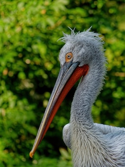 Vertical selective focus shot of a dalmatian pelican with greenery